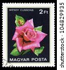 """HUNGARY - CIRCA 1982: A stamp printed in Hungary shows a rose with the inscription """"Wendy Cussons"""", from the series """"Flowers"""", circa 1982 - stock photo"""