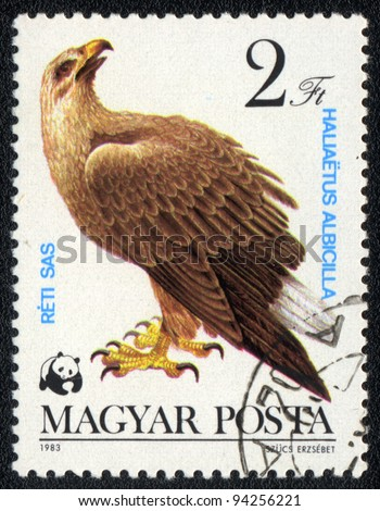 HUNGARY - CIRCA 1983: A stamp printed in HUNGARY  shows a White-tailed Eagle (Haliaeetus albicilla), from series bird of prey, circa 1983 - stock photo