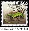 """HUNGARY - CIRCA 1989: A stamp printed in Hungary shows European Green Lizard (Lacerta viridis), with the same inscriptions, from the series """"Endangered Reptiles"""", circa 1989. - stock photo"""
