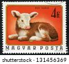 HUNGARY - CIRCA 1974: A stamp printed in Hungary shows image of a bull (bos taurus), circa 1974 - stock photo
