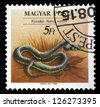 "HUNGARY - CIRCA 1989: A stamp printed in Hungary shows the Grass Snake (Natrix natrix), with the same inscriptions, from the series ""Endangered Reptiles"", circa 1989. - stock photo"