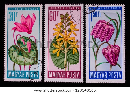 HUNGARY - CIRCA 1968: A stamp printed in Hungary shows three different kinds of rose and yellow flowers,circa 1968 - stock photo