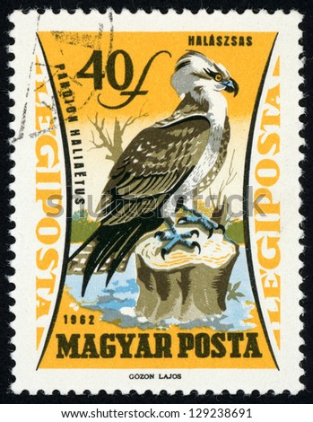 HUNGARY - CIRCA 1962: post stamp printed in Hungary (Magyar) shows Western Osprey (Pandion haliaetus)(hawk, eagle), birds of prey issue, Scott catalog C229 AP67 40f orange yellow & black, circa 1962 - stock photo