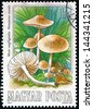 HUNGARY - CIRCA 1984: stamp printed in Hungary (Magyar) shows scotch bonnet or  fairy ring mushroom (marasmius oreades); edible mushroom series, photogravure, engraved, Scott 2874 A759 1fo, circa 1984 - stock photo
