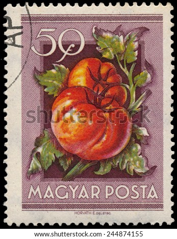 "HUNGARY - CIRCA 1954: Stamp printed in Hungary shows Tomatoes, from the series ""National Agricultural Fair"", circa 1954  - stock photo"