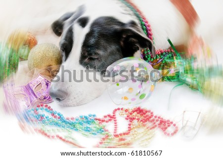Hungover dog with motion blur - stock photo