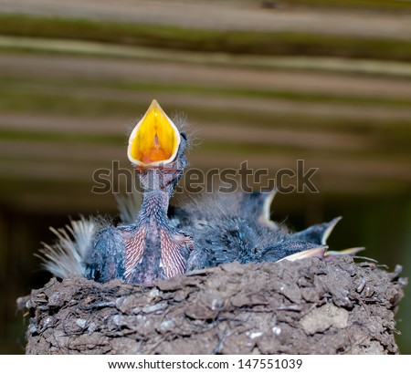 hungry birds in nest - stock photo