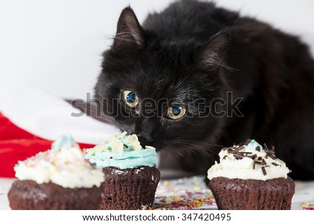 hungry black cat looks cupcake on white background - stock photo