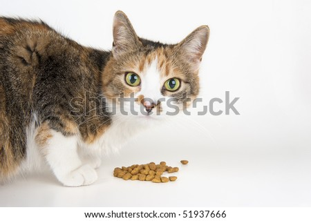 Hungry cat looking at the camera - stock photo