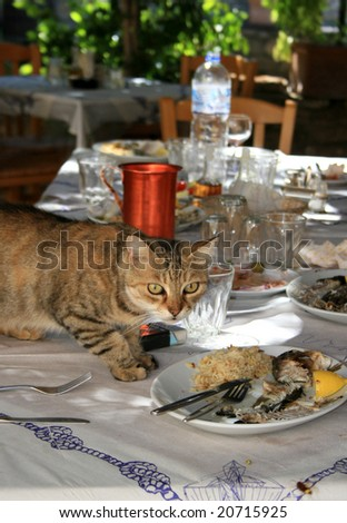 hungry cat stealing fish from table in tradition greek taverna in Rhodes - stock photo