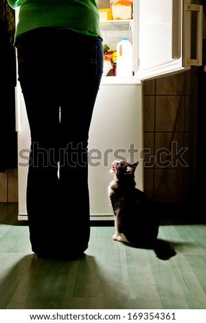 Hungry cat waiting for a meal and lick one's lips. refrigerator emit bright light. Dog feeding time. - stock photo