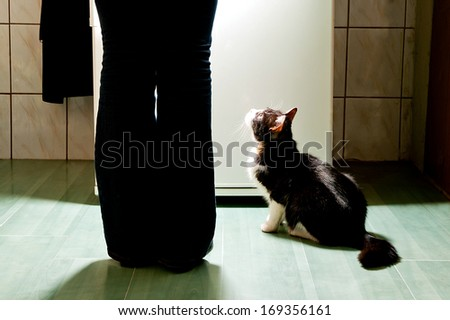 Hungry cat waiting for a meal. refrigerator emit bright light. cat feeding time. - stock photo