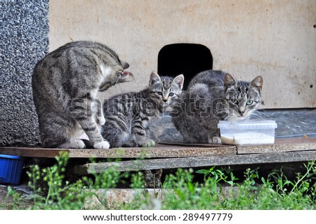 hungry cat with young drinking milk - stock photo