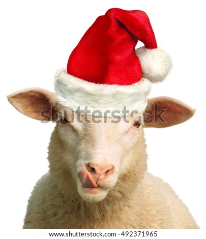 Hungry Christmas Sheep