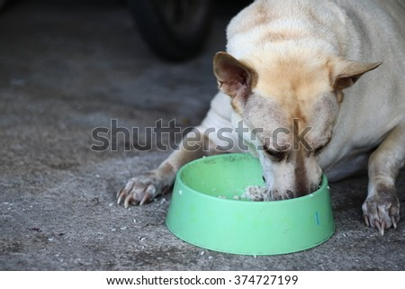 Hungry dieting Labrador puppy dog and empty food dish isolated on white with copy space - stock photo