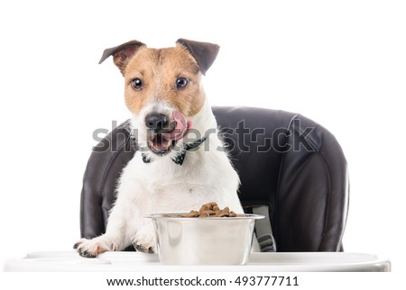 Hungry dog eating dry food from bowl licking with tongue