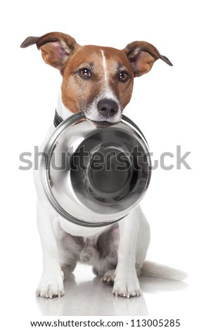 hungry dog food bowl mouth - stock photo