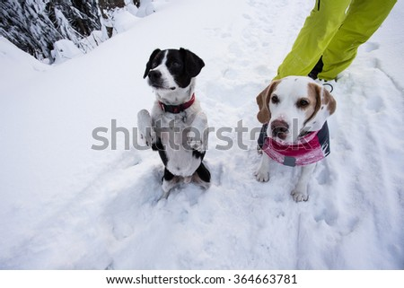 Hungry dog on snow