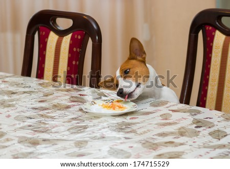 Hungry dog steals food while being home alone. - stock photo