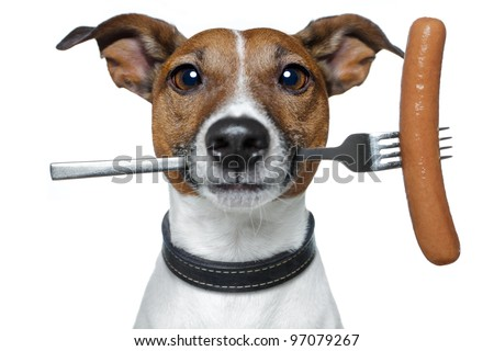 hungry dog with a sausage on the fork - stock photo