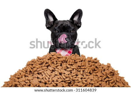 hungry  french bulldog dog behind a big mound or cluster of food  , isolated on white background - stock photo