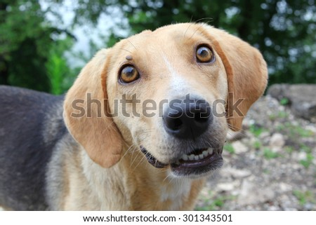 Hungry homeless dog looking in your eyes - stock photo