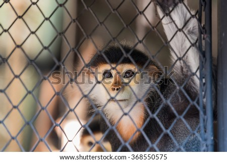 Hungry monkey in the cage, thailand