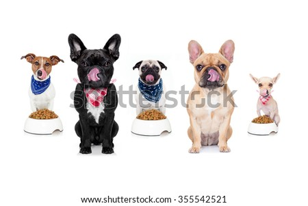 hungry  row team and group of  dos behind  bowls of food , isolated on white background - stock photo