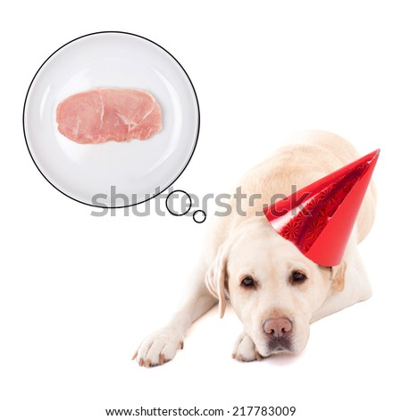 hungry sad dog (golden retriever) in birthday hat dreaming about food isolated on white background - stock photo