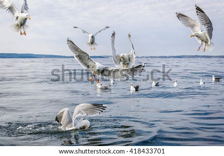 Hungry seagull birds fighting for fish rests - stock photo