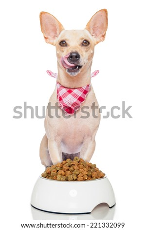 hungry terrier dog with a food bowl sticking out its tongue , isolated on white background - stock photo