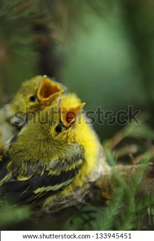 Hungry young bird on the nest - stock photo