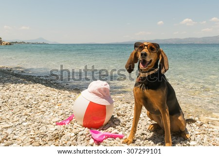 Hunt dog on the beach wearing sunglasses portrait.  - stock photo
