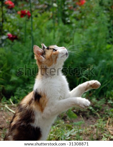 Hunt . Domestic cat. Jump. - stock photo