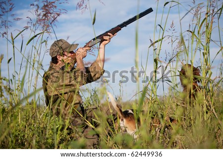 Hunter aiming the hunt during the hunting season. Hunting dogs waiting for the shot