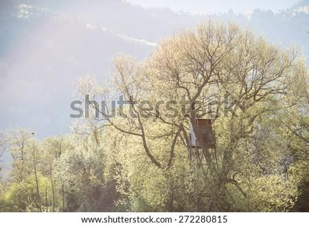 hunter's raised blind in tree  - stock photo