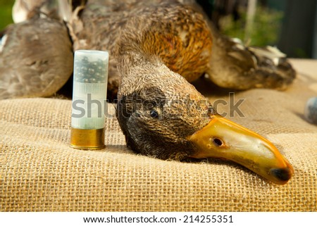 Hunting ammunition and duck on the table - stock photo