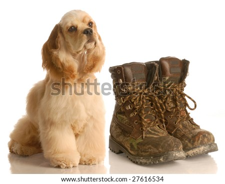 hunting dog - american cocker spaniel sitting beside pair of camouflage hunting boots - stock photo
