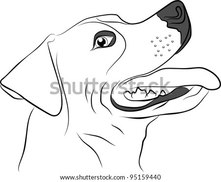 hunting dog isolated on white background - freehand - stock photo