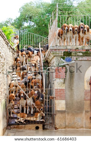 Hunting dogs in the cage - stock photo