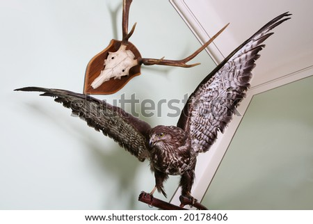 Hunting trophy mounted on a wall - stock photo
