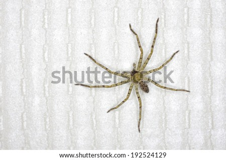 huntsman spider is on the wallpaper in the house