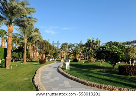 HURGHADA, EGYPT - OCTOBER 14, 2013:Beautiful palm trees in a tropical luxury hotel on the shores of the Red Sea.