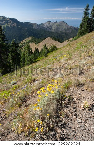 Hurricane range, Olympic National Park, WA, USA - stock photo