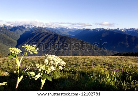 Hurricane Ridge in Olympic National park, Washington state - stock photo
