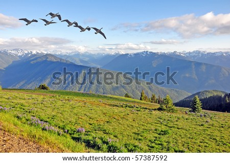hurricane ridge in Olympic Peninsula, Washington - stock photo