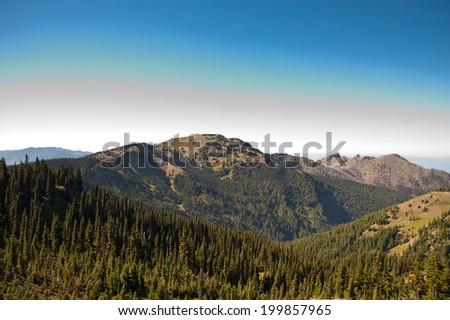 Hurricane Ridge in the Olympic Peninsula - stock photo