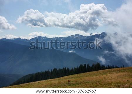 Hurricane ridge, olympic national park, washington - stock photo