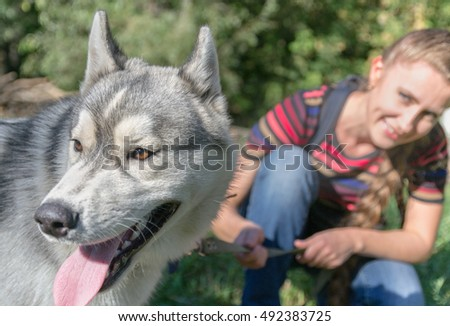 Husky dog with the owner spending time outdoors