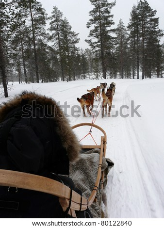 Husky dogs pulling a sled in the snow in Lapland. - stock photo